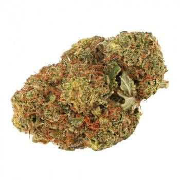 Daily Special - Indica
