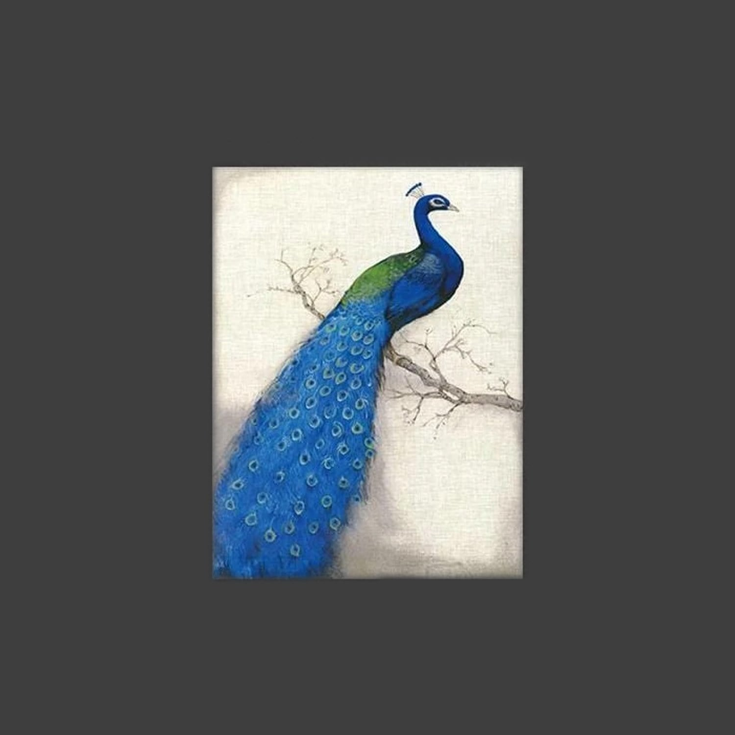 Pavo Stretched Canvas