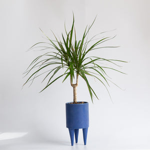 Bobbie Specker: Stilted Planter