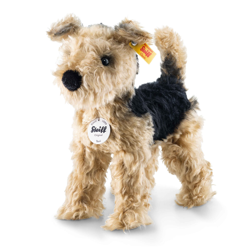 Terri Welsh Terrier