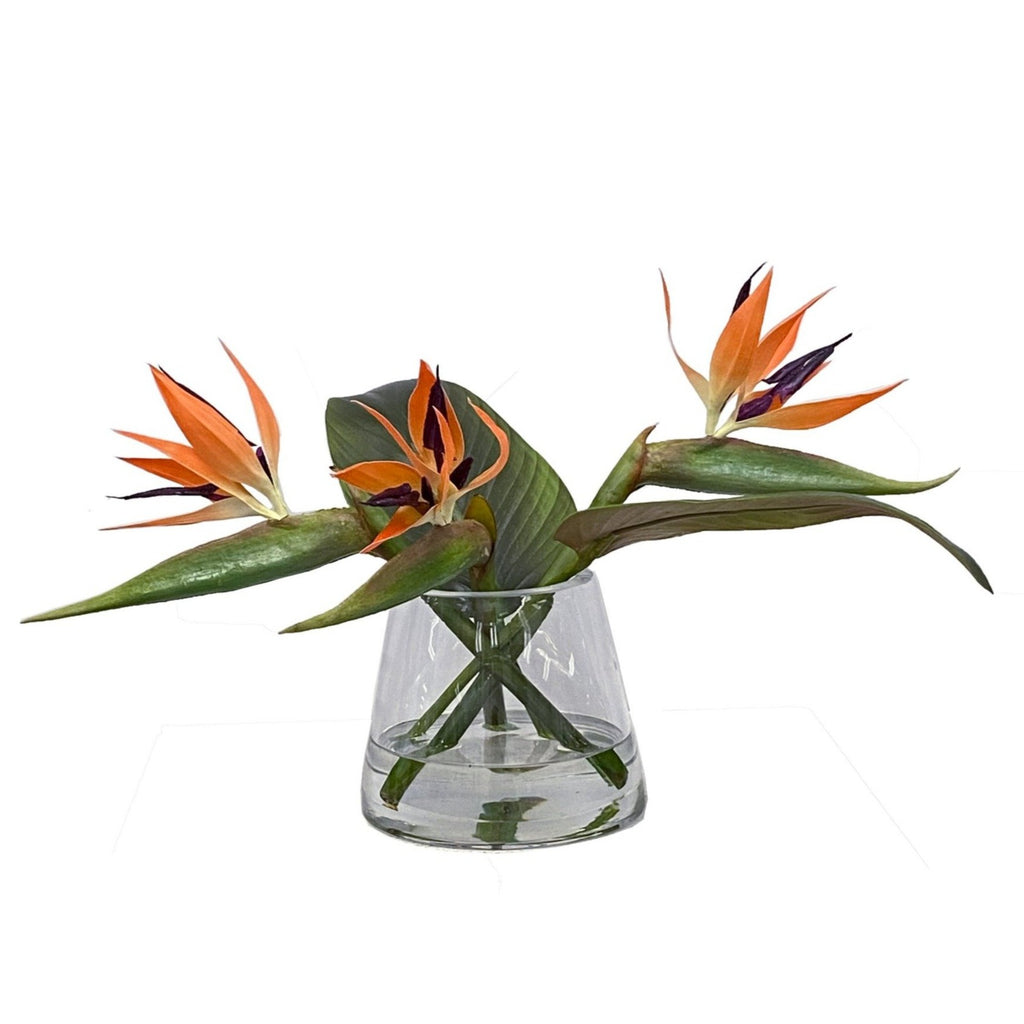 Bird of Paradise in Vase, 12""