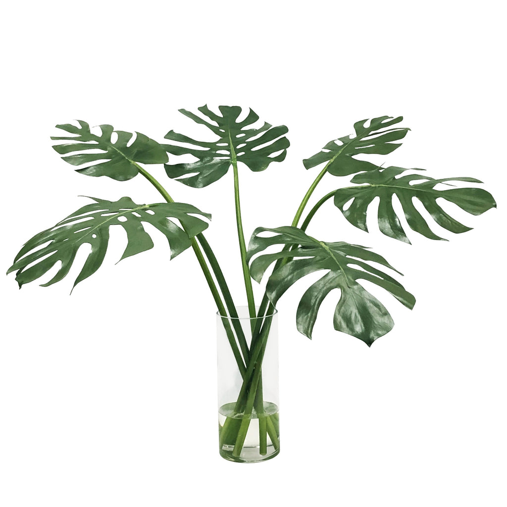 Multi-Monstera in Vase