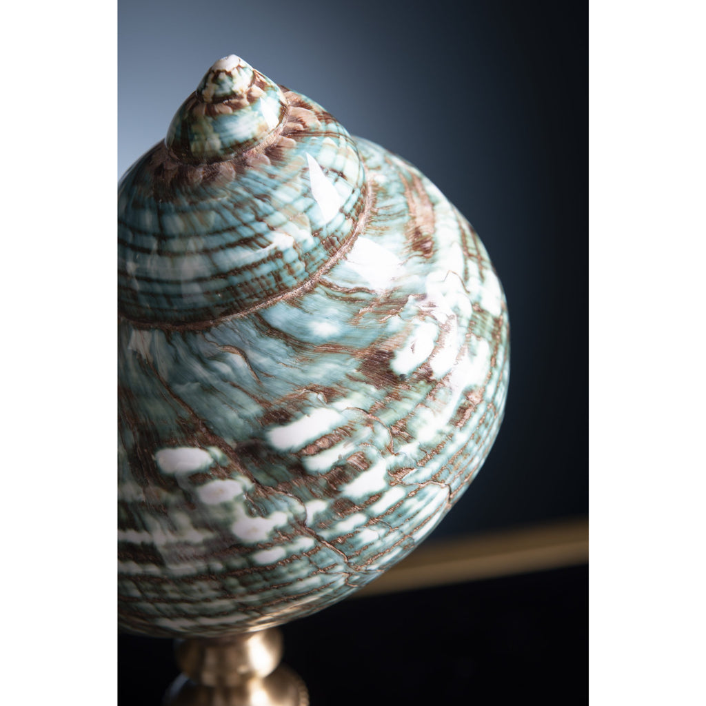 Turbo Petholatus Shell on Brass Stand