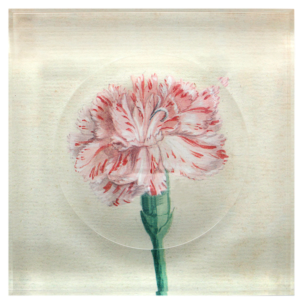 Watercolor Carnation Trinket Bowl