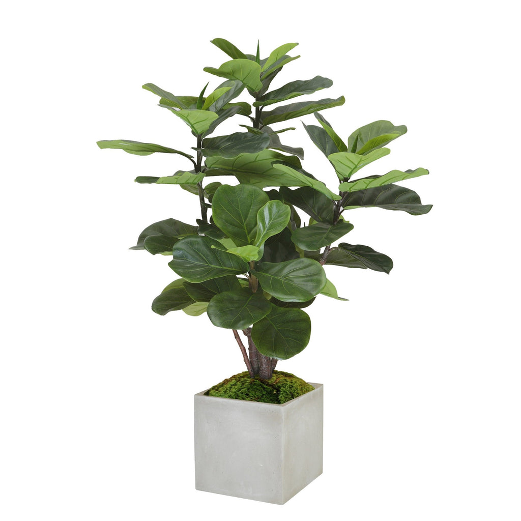 Fiddle Leaf Fig Tree, Small