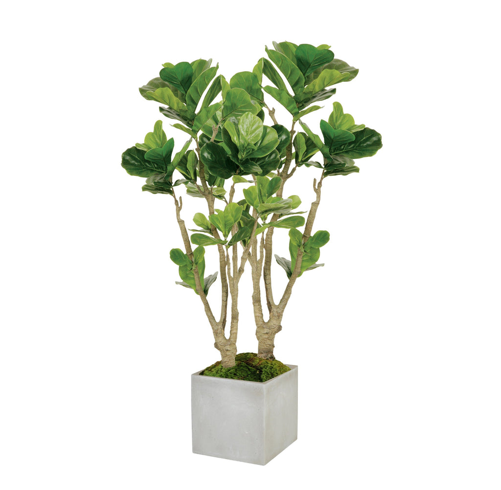 Fiddle Leaf Fig Tree, Medium
