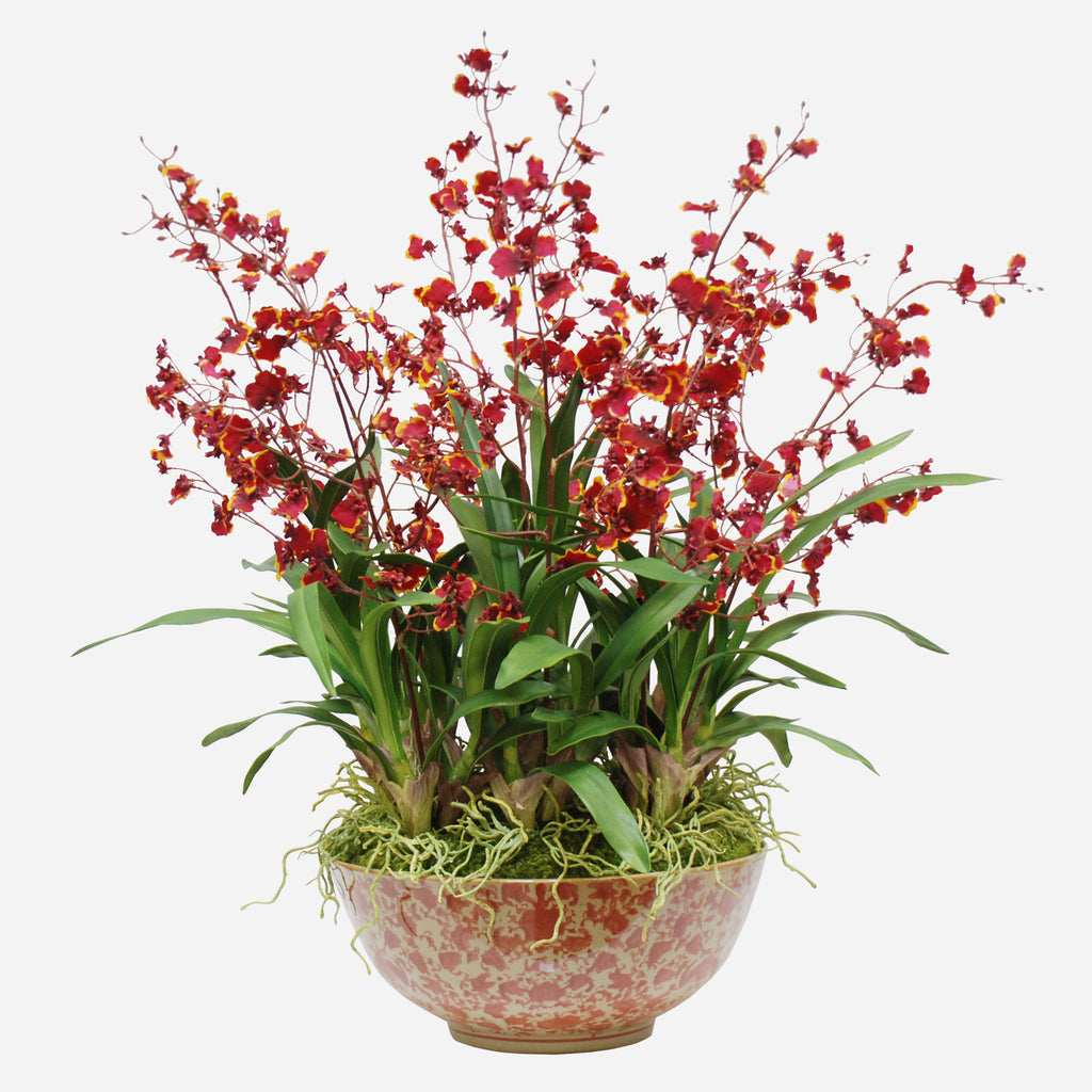 Oncidium Orchid in Longlife Bowl