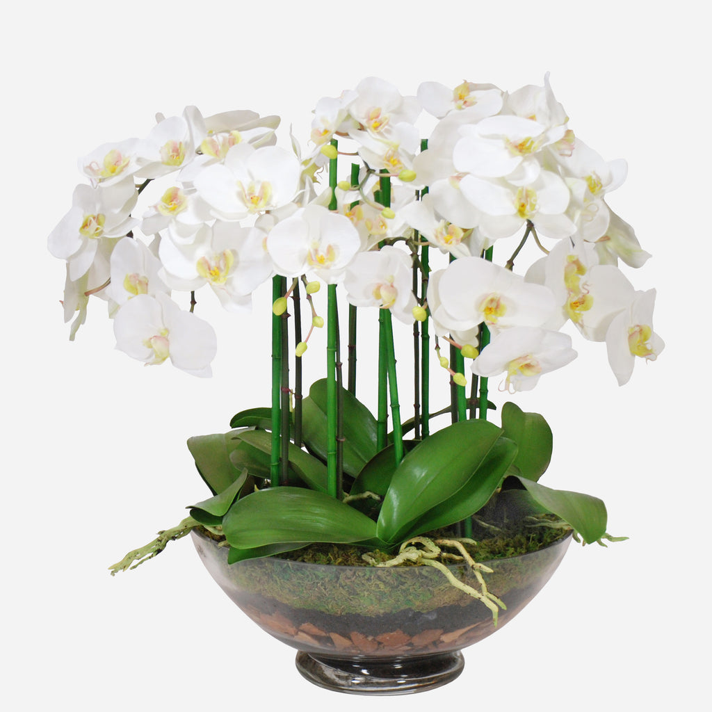 Phalaenopsis Orchid In Glass, 24""