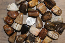 Load image into Gallery viewer, Tumbled Petrified Wood
