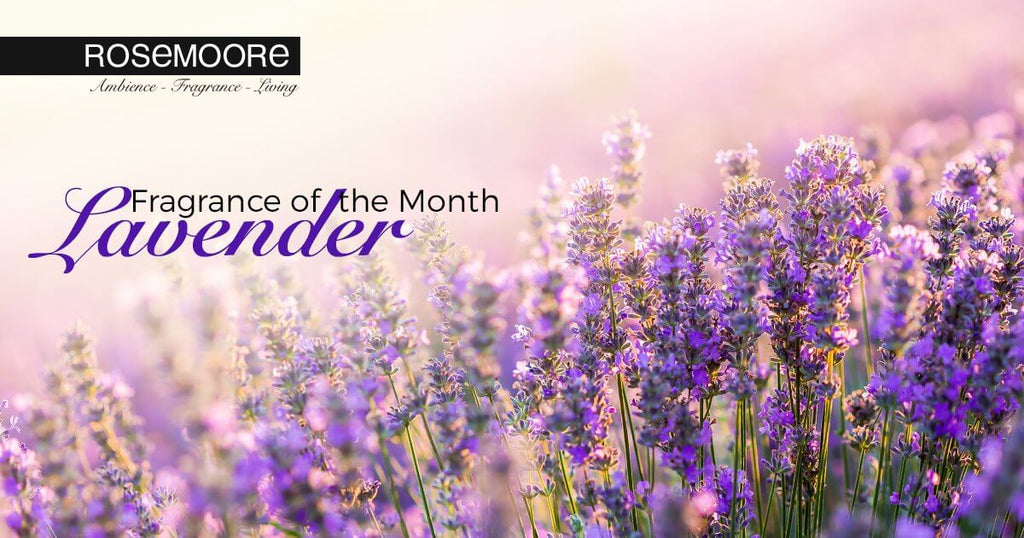 Fragrance of the Month- What Makes Lavender one of the Most Sought After Fragrances Worldwide