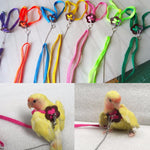 Colorful Bird Outdoor Harness With Leash For Small Birds