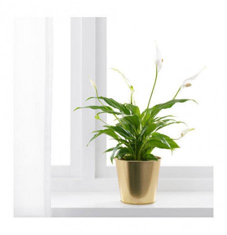 IKEA DAIDAI PLANT POT 12CM BRASS-COLOUR