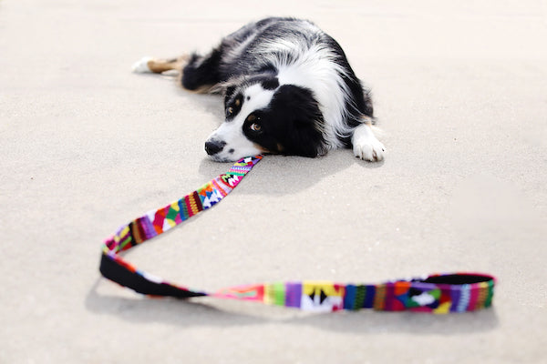 DOG COLLAR W/SNAP APART BUCKLE AND LEASH
