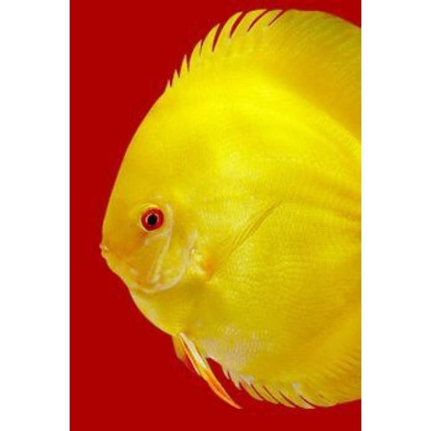 3F Discus SPECIAL Premium Mix 95g - Fish Food