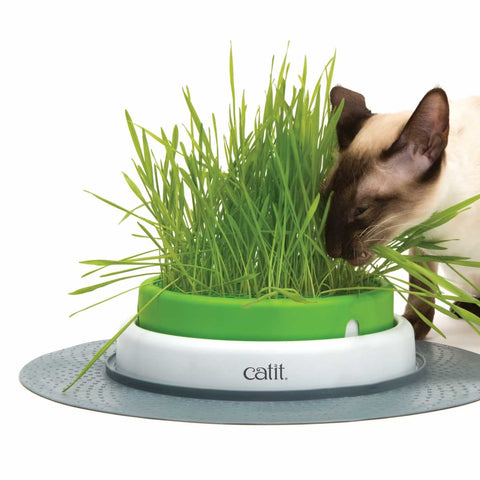 Catit Senses 2.0 Grass Planter - Cat Food