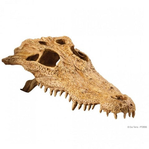 Exo Terra Crocodile Skull - Decor & Lighting