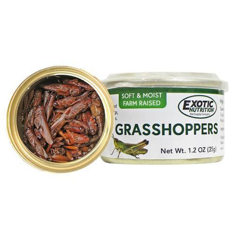 Exotic Nutrition Grasshoppers - Small Pet Food