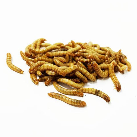Live Feeder Mealworms - Food & Health