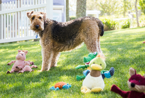 Get tips on playtime and finding the right sizes for your pet at the HuggleHounds®️ blog.
