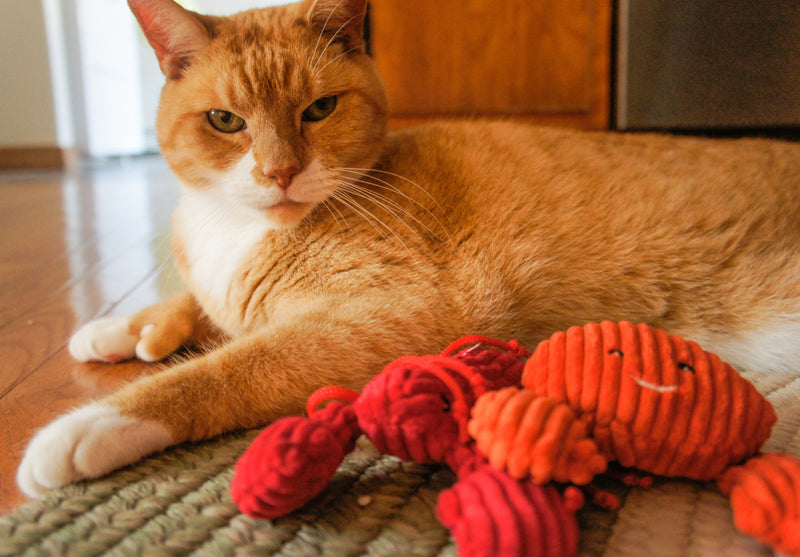 Cat with her HuggleHounds® HuggleKat crab toy
