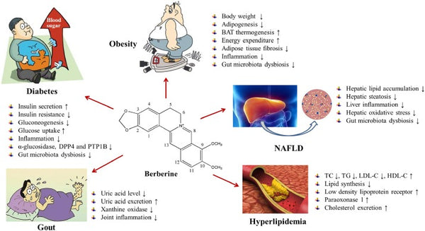 How_Berberine_Fights_Oxidative_Stress_Inflammation_And_Diabetes