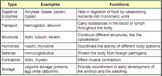 Proteine-functions_and_types