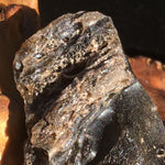 Darwinite Darwin Glass Tektite 8.5 grams-Moldavite Life