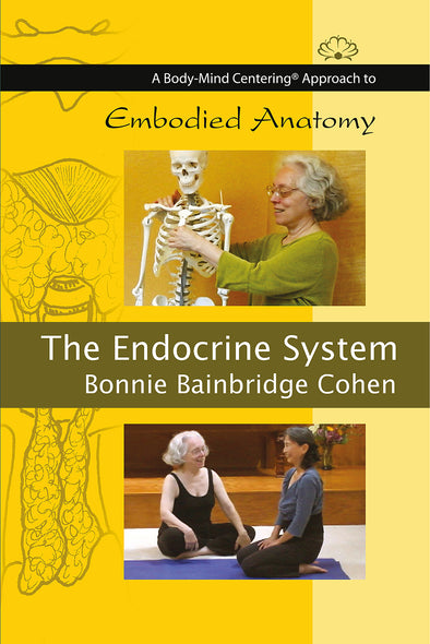 Embodied Anatomy and the Endocrine System