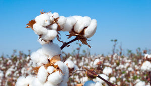 How are cotton and bamboo processed?