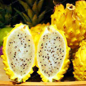 Rare Yellow Pitaya Fruit Trees Bonsai Perennial Plants Seeds 100PCS