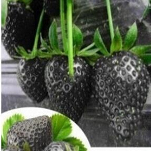 Climbing Strawberry Bonsai Fruit Seeds 100pcs