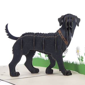 Close up image of black labradors pop up card featuring a 3D standing black labrador with a brown collar
