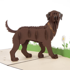 Close up image of Brown Labradors Pop Up Card