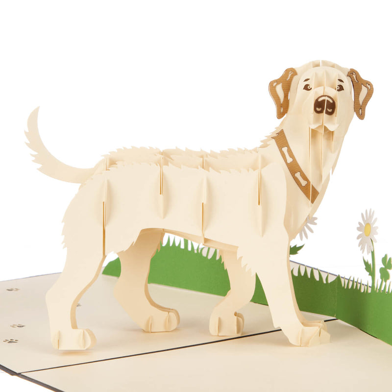 Close up image of white labrador pop up card featuring a 3D standing white labrador in front of a backdrop of grass and flowers