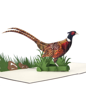 Pheasant Pop Up Card, Close Up Image