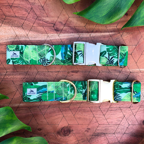 Monstera leaf tropical dog collar. Jungle dog collar.