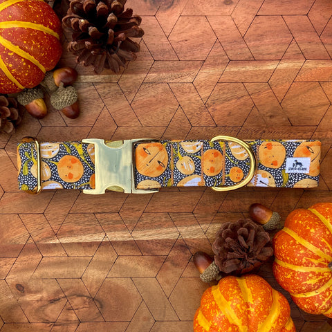 Autumn 2020: Side-Eyed Squash Dog Collar, Pumpkin Dog Collar, Fall Dog Collar, Halloween Dog Collar