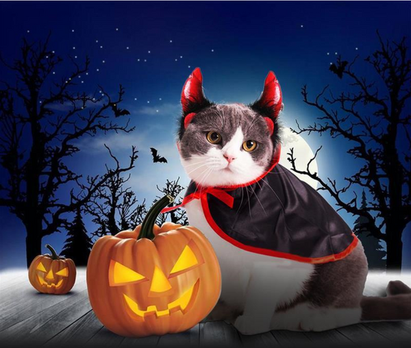 5 Pet  Halloween Costumes Make A Funnier Festival