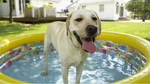 Caring For Your Dogs' Health in Summer
