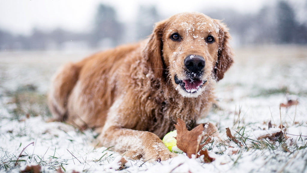 What effect will cold weather have on your pet?