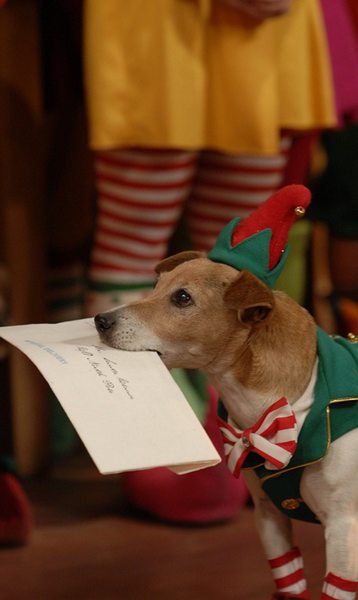 12 Dogs of Christmas: Great Puppy Rescue Movie that You Must See
