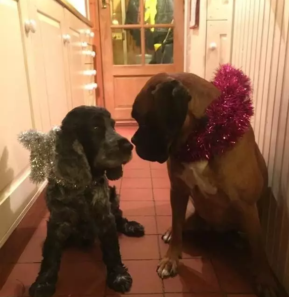 Because of the Dog, This Christmas Comes Earlier