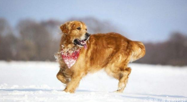 What effect will cold weather have on your pet