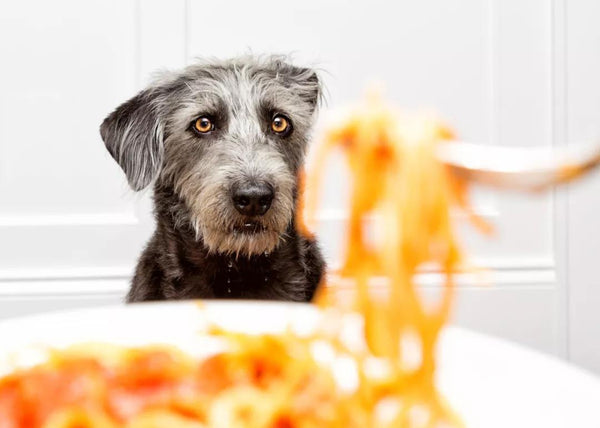 If Your Pet is a Picky Eater, Try This: