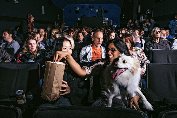 These Movie Theaters are Now Offering Dog-Friendly Screenings around the World
