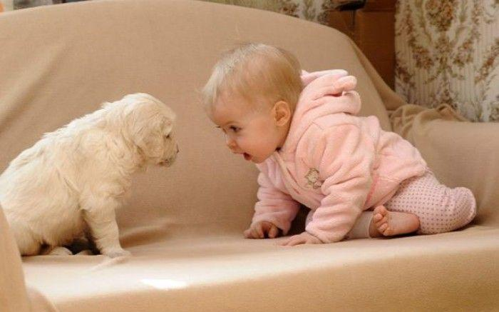 Whether the dog is good or bad for the baby