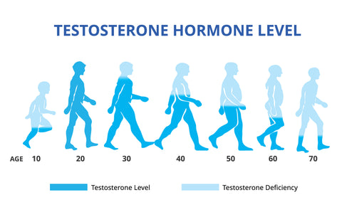 Testosterone Hormone Levels