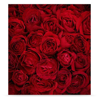 Westcott Bed of Roses 6'x8' Scenic Photo Back Drop
