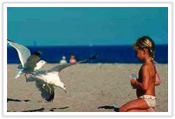 NYI - Sea gulls and Child