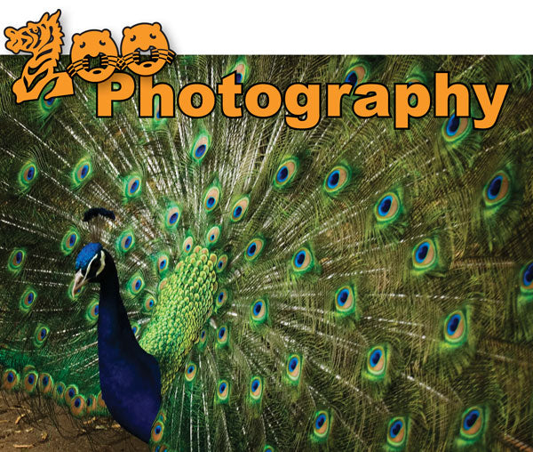zoo header with peacock